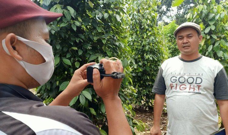 """Catatan Kunjungan Kerja: Kebun Lada Organik Dawar Mandiri Farm """"Lada Max"""""""